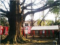 雑司ヶ谷周辺の写真
